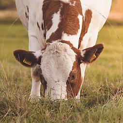 Landbouwdieren
